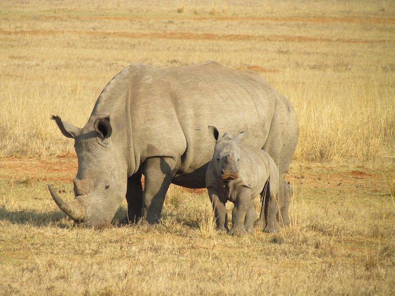 rhinos 382401 1280