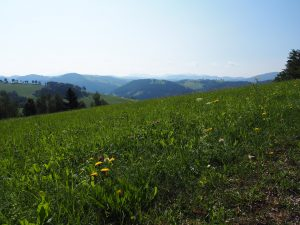 meadow 2673425 1920